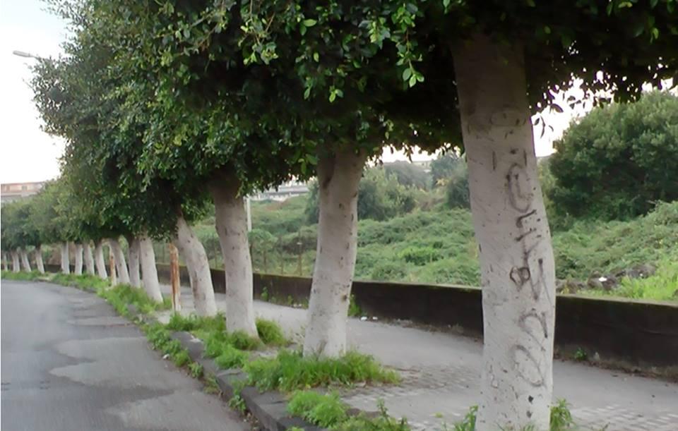 alberi-corso-italia